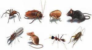 مكافحة الحشرات بمكة