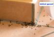شركة مكافحة النمل